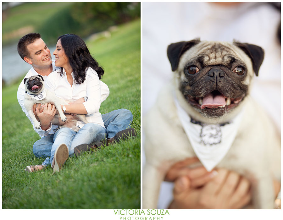 Uconn, Horse Barn Hill, Storrs, Pug dog, Engagement Wedding Pictures Photos, Victoria Souza Photography, vintage, rustic, DIY, Anthropologie, Best CT Wedding Photographer