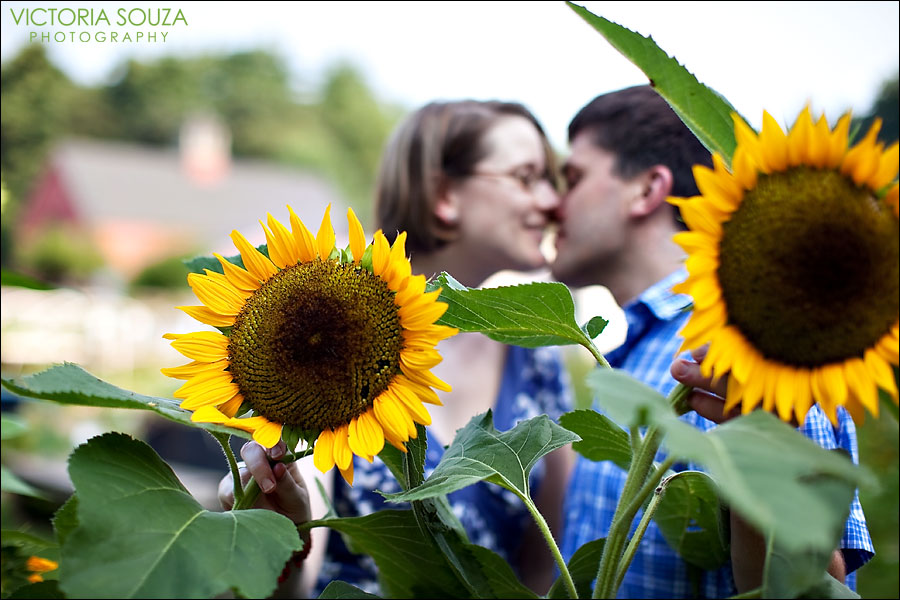 CT Wedding Photographer, Victoria Souza Photography, Drumlin Farm, Lincoln, MA Engagement Wedding Portrait Photos