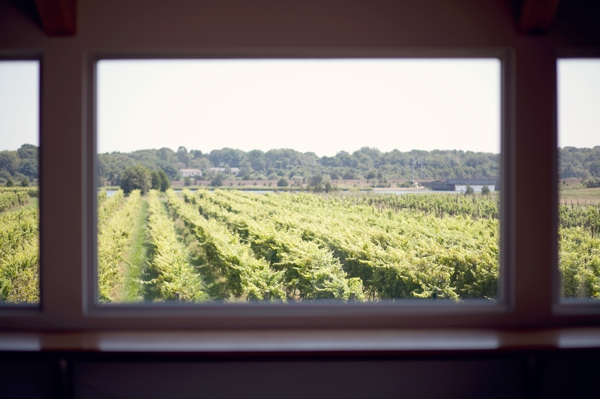 Saltwater Farms Vineyard, Stonington, CT,  Wedding Pictures Photos, Victoria Souza Photography, Best CT Wedding Photographer